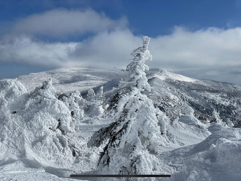 【重要】3/3樹氷の状況