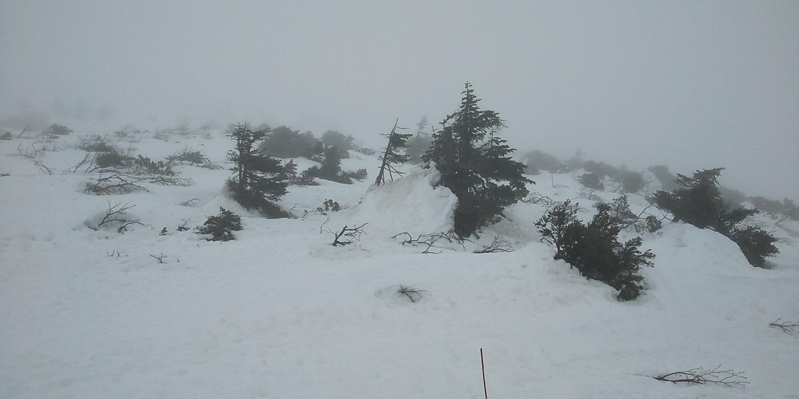 樹氷崩落のお知らせ