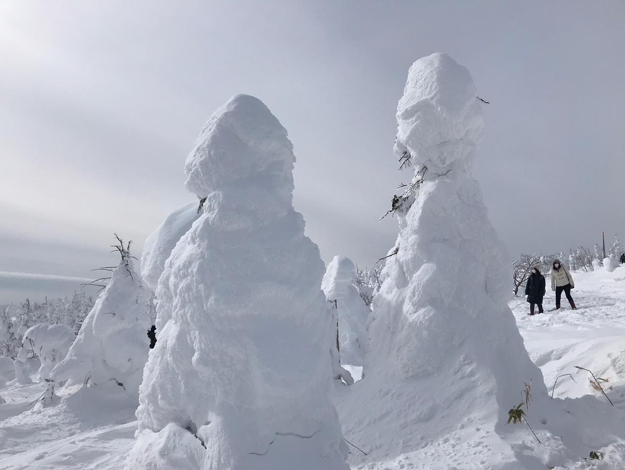 1月23日(土)樹氷速報です!!